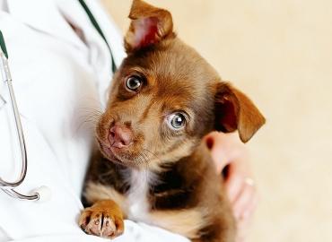 Entenda o que diz a lei que estabelece mudanças na eutanásia de cães e gatos sancionada neste mês